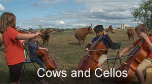 Cows and Cellos